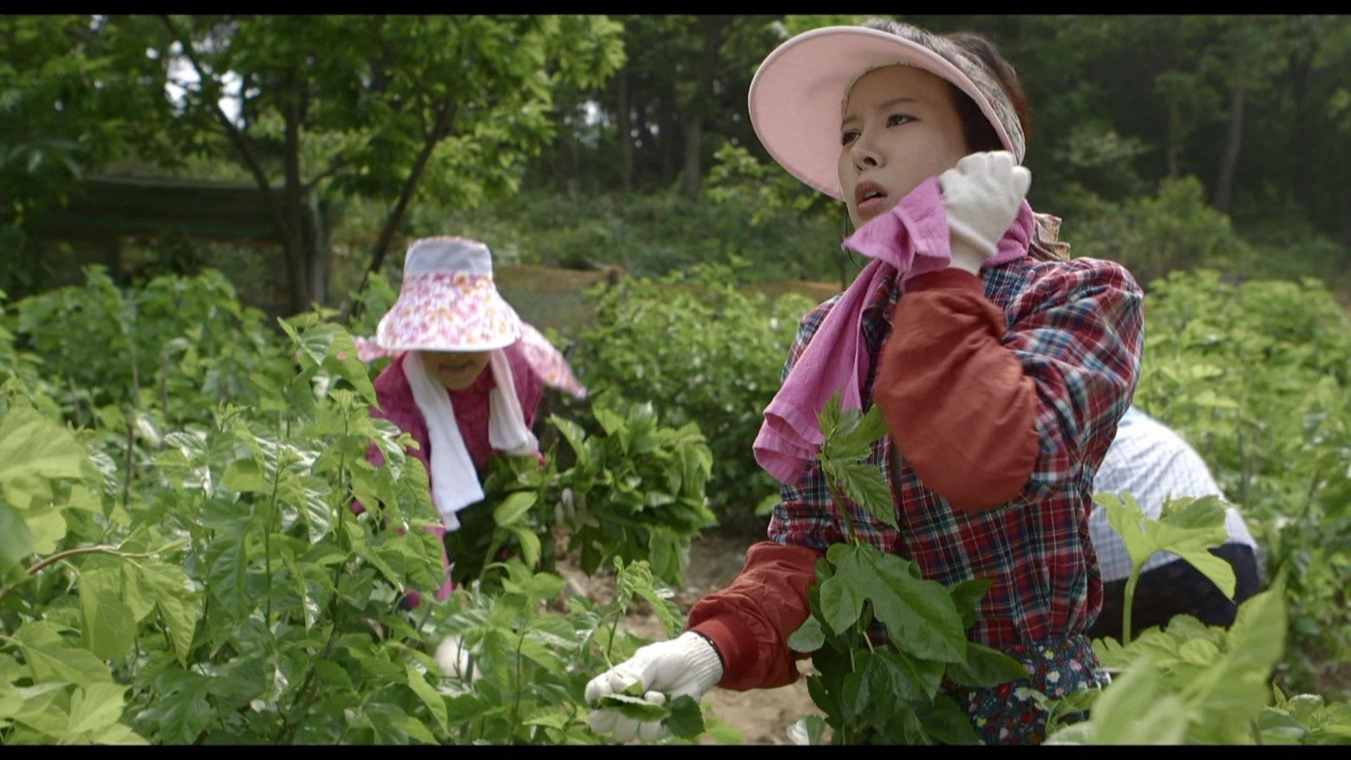 mulberry korean movie 2014