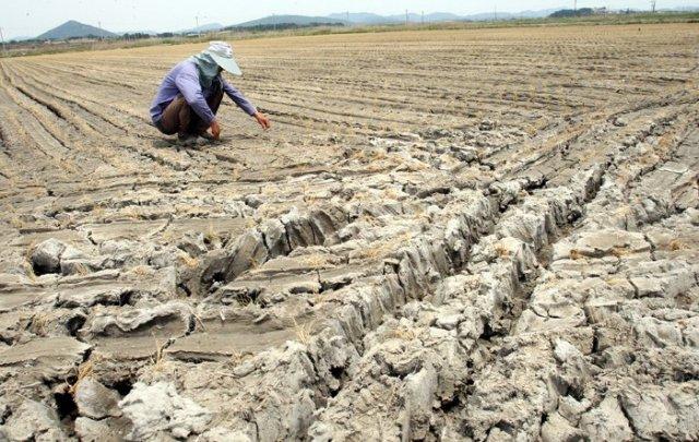 Historic Drought Strikes Korea