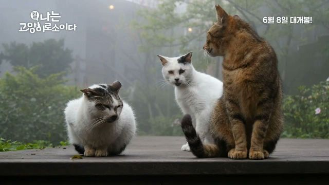 "[Video] Added new trailer for the upcoming Korean documentary ""I Am a Cat"""