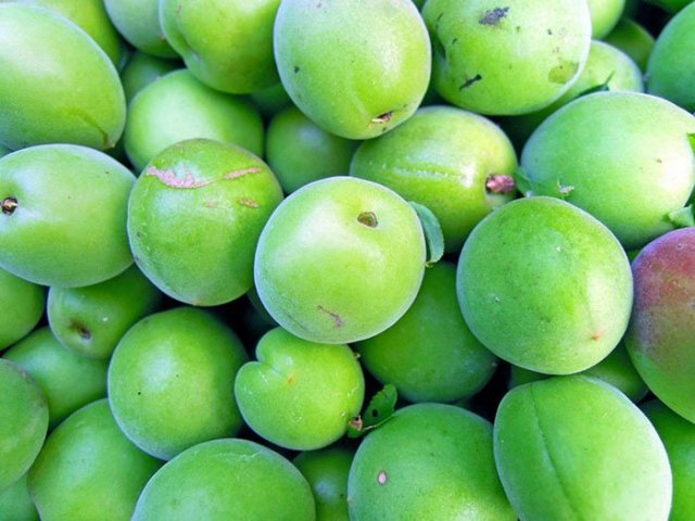 How to Enjoy Green Plums Without Poisoning Yourself