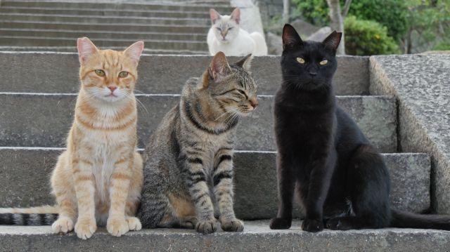 "[HanCinema's Film Review] ""I Am a Cat"""
